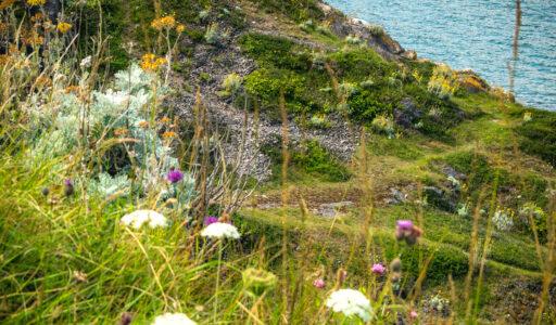 unesco-mab-biosphere-north-devon-business-partner-scheme-engagement-sustainability-biodiversity
